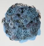 lichen-2-72