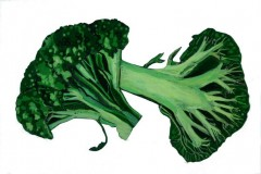 Broccoli-72